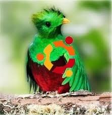 quantal quetzal.jpg